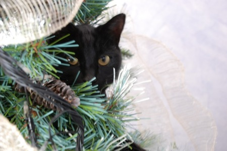 when your black cat decides to sit half way up your Christmas tree – as